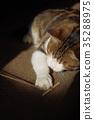 じゃれる 고양이 35288975