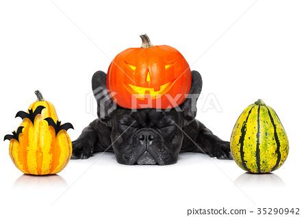 halloween dog  banner 35290942