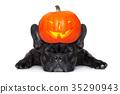 banner dark dog 35290943