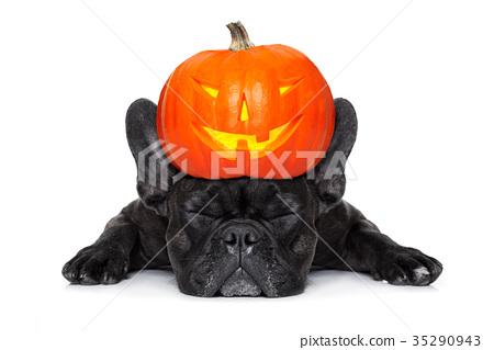 halloween dog  banner 35290943