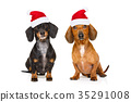 couple of  dogs on christmas holidays 35291008