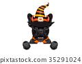 costume dog halloween 35291024