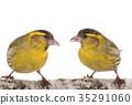 鸟儿 鸟 自然 35291060
