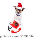 christmas, dog, hat 35291094