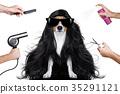dog, groom, grooming 35291121