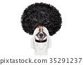 dog, groom, grooming 35291237