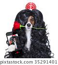 Lola, dog, love 35291401