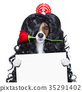 valentines in love spanish lola dog 35291402