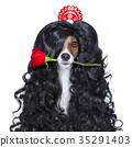 valentines in love spanish lola dog 35291403