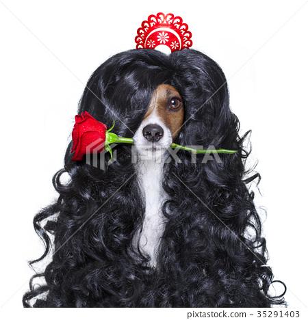 valentines in love spanish lola dog 35291403
