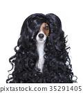 dog, groom, grooming 35291405