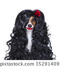 Lola, dog, love 35291409