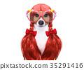 dog, grooming, hair 35291416