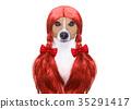dog, grooming, hair 35291417