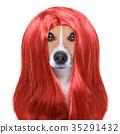 dog, groom, grooming 35291432