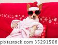 christmas, dog, spa 35291506