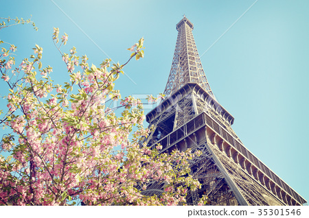 Eiffel Tower with pink flowers, Paris, France 35301546