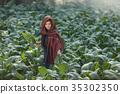 tobacco, farm, farmer 35302350