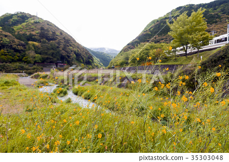 Wild yellow flowers by Uno River in Kameoka, Japan 35303048