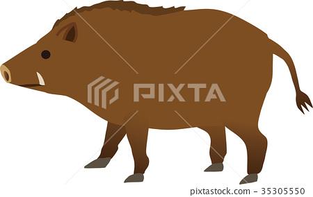boar 35305550