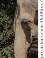 elephant, elephants, animal 35306557