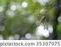 蜘蛛 昆蟲 蜘蛛網 35307075