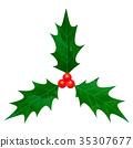 holly, Holly tree, christmas 35307677