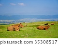 range cattle, cow, cattle 35308517