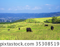 range cattle, cow, cattle 35308519