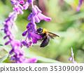 蜜蜂 日本木匠蜂 花朵 35309009