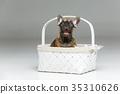 pet, dog, animal 35310626