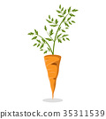 carrot, orange, isolated 35311539