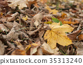 closeup of maple leaves on the floor in autumn 35313240