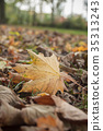 closeup of maple leaves on the floor in autumn 35313243