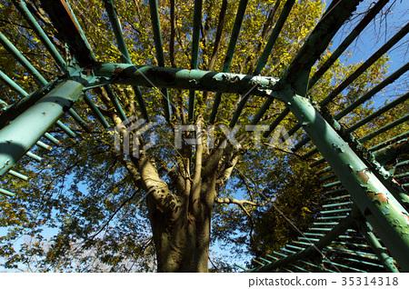 ไม้,โรงงาน,ทัศนียภาพ 35314318