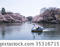 벚꽃, 이노카시라 공원, 연못 35316715