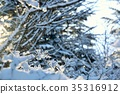 diamond dust, frost covered tree, frost-covered tree 35316912