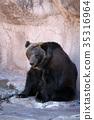 곰, 포유류, 포유 35316964