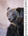 곰, 포유류, 불곰 35316965