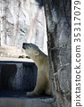 polar, bear, bears 35317079
