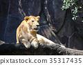 사자, 라이언, 백수의 왕 35317435