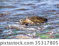 동물, 바다, 거북이 35317805