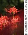 ดอกไม้ป่า,ฤดูใบไม้ร่วง,ดอกไม้ 35319716