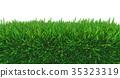 grass, green, nature 35323319