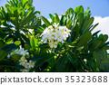 槿 花朵 花 35323688