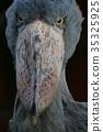 조류, 새, 노려보다 35325925