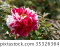 식물, 꽃, 플라워 35326364