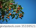 과일, 적색, 식물 35330521
