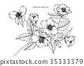 Camellia Japonica flower drawing. 35333379