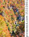 鳴子峽 楓樹 紅楓 35333601